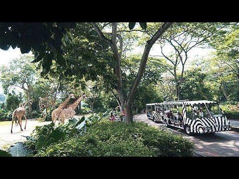 The Tram Singapore Zoo 3