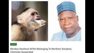 Snake and Monkeys swallow money in Nigeria Poland anti crypto Youtube Videos