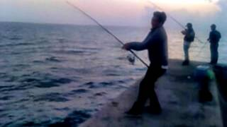 SHORE JIGGING TAIWAN  -  98ZHK  VS  7.6kg 飛扁