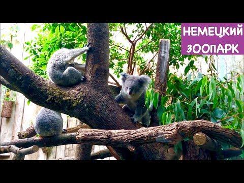 Немецкий Зоопарк, Вот Каким Должен Быть Зоопарк | Часть 1