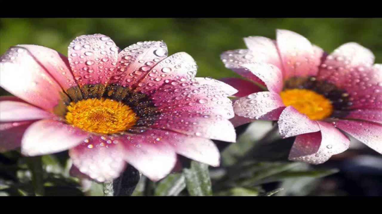 Descargar fondos de pantalla pack 1 flores youtube for Imagenes de fondos bonitos