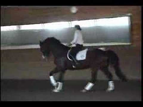 Conrad Schumacher's Dressage S... is listed (or ranked) 33 on the list The Best Horse Racing Movies