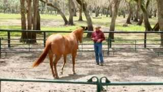Liberty Horse Training Problem-Solving with Pat Parelli