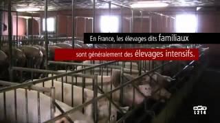 La Tuerie Des Porcs Français !