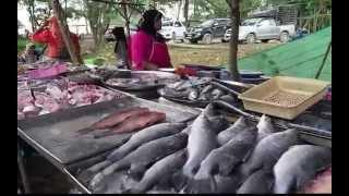 KOH LANTA, THAILAND: Tour Of Amazing Farmers Market
