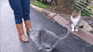 Two cats want food in the street