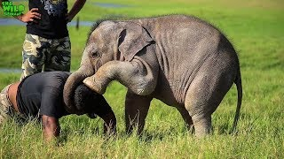 Save the wild elephants: Working to protect the elephants in the wild