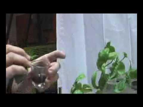 Atlantis Hydroponics™ Presents: Ch. 1 Cloning A Mother Plant & Seed Propagation Germination