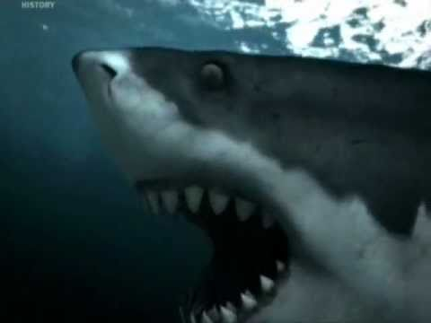Sea Monsters Megalodon Sea Monsters: M...