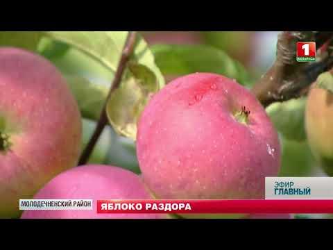 Урожай яблок: куда деть излишки? Главный эфир