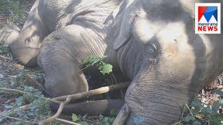 download lagu Wild Elephant Died After Jcb Hits  Manorama News gratis