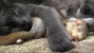 Crimean cat 'adopts' 4 orphaned baby squirrels
