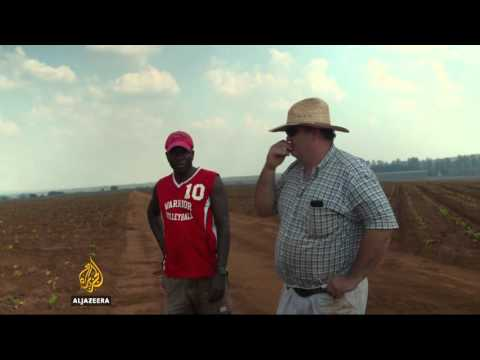 Zimbabwe's white farmers start anew in Mozambique