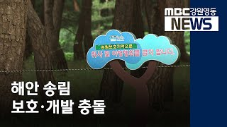 R]강릉 송정 소나무숲, 보호·개발 충돌