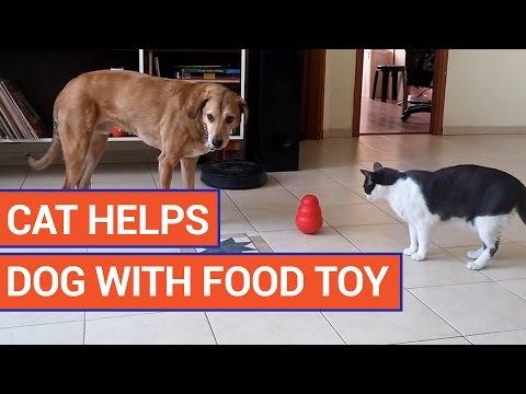 転がすと餌が少しずつ出る知育玩具おもちゃを犬の為に猫が出してあげる♪