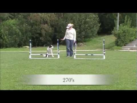 Jump Practice Patterns - Agility Dog Training video