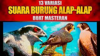 13 SUARA BURUNG ALAP-ALAP - FALCON