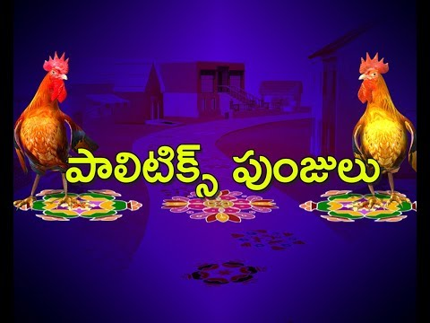 Political Punjullu |  Satire on Kodi Kathi incident | NO Comment | ABN Telugu