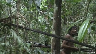 Uncontacted tribe threatened by loggers- BBC World Service