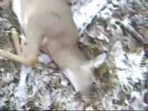 2 Deer, 1 Hunt Video