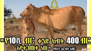 """Ethiopia: """"የ10ሺ ብር ቀንድ ከብት 400 ብር እየተገመተ ነው"""" Cattle from 10k to 400 birr - VOA"""