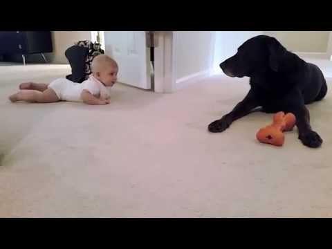 Un bebé gatea bajo la atenta mirada de su perro que le espera pacientemente