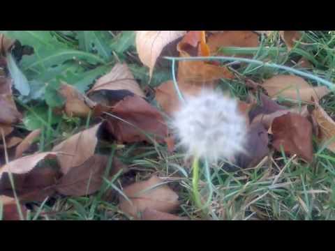 Melissa Etheridge - This Is Not Goodbye