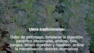 Plantas que Curan: Ajenjo
