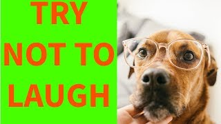 Funny Dogs Videos Compilations  2019
