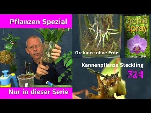 Orchideen Karnivoren exotische Pflanzen Spezial