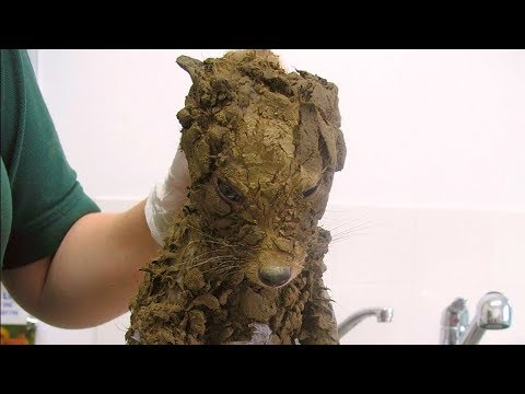 Рабочие подумали, что нашли грязного щенка, но когда они его почистили их ждал сюрприз