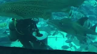 Wonderful world of underwater
