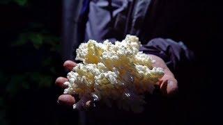 Finding Rare EDIBLE Mushrooms!