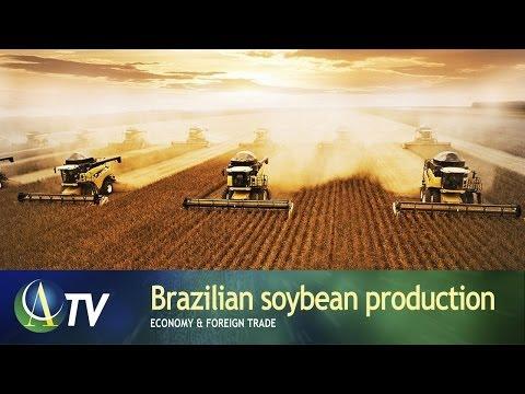 Brazilian soybean production   Economy & Foreign Trade