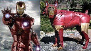 Superheroes In Real Life As Dogs