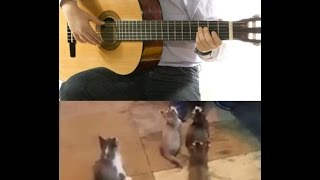 Gatitos Atentos escuchando a cantante IMPERDIBLE