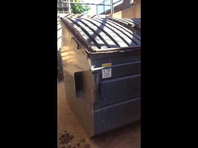 Daring Man Yells At Bear To Leave Garbage Dump - Video