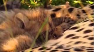 Thế giới động vật: Cuộc chiến sinh tồn (Phần 2) 0403