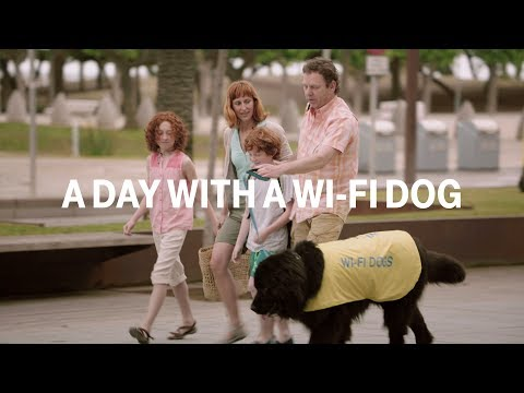 A Day With A Wi-fi Dog video