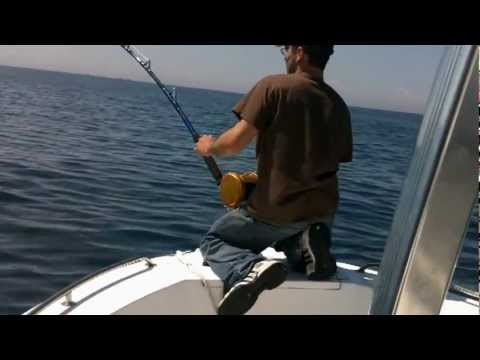 Mako Shark + Blue shark fishing