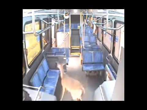 შველი ავტობუსში - სენსაციური შემთხვევა
