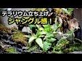 在庫の植物達の出番!滝のテラリウム立ち上げpart7【100均の植物】
