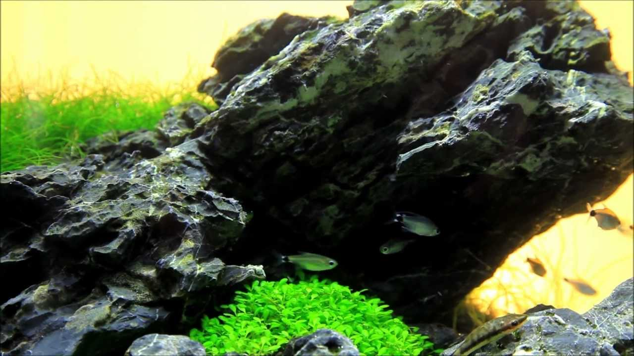 Just Aquascaping - Mini M Iwagumi - YouTube