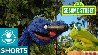 Sesame Street: Grover Bird Watches
