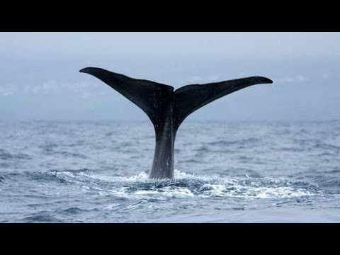 No Room For Whaling in the 21st Century