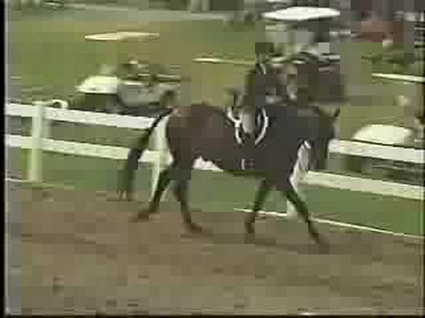 Renaissance at Lake Placid Horse Show 2008 *FOR SALE* Video