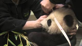 Starting the New Year Healthy - Panda Cub 20th Exam