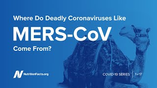 Where Do Deadly Coronaviruses Like MERS CoV Come From?