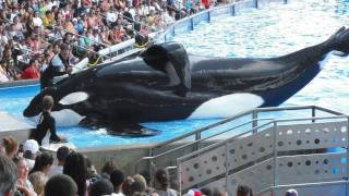 SeaWorld's Killer Whale's Splashing Visitors (in 2009)