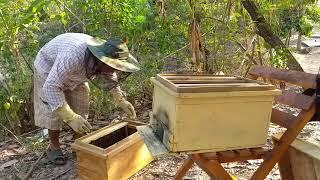 """Cách chia đàn ong mật đơn giản và hiệu quả (ong nội)""""săn bắt đồng nai """""""